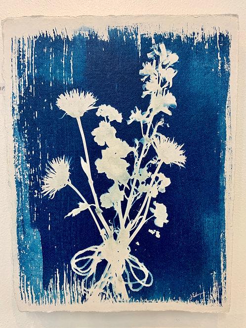 Botanical Cyanotype Prints