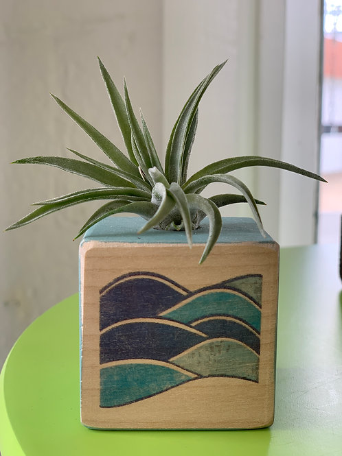 Air Plant in Hand Painted Wooden Black with Waves