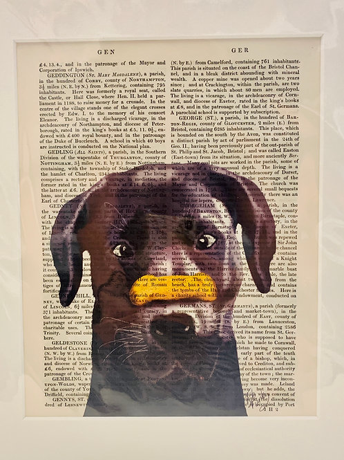 Black Lab with Biscuit Art Print
