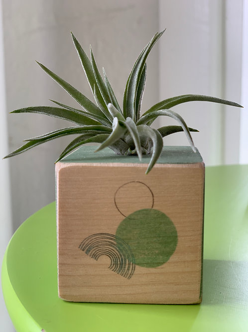 Air Plant in Hand Painted Wooden Black in Green