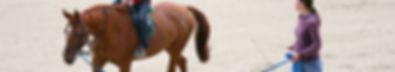 Jenni Nellist Animal Behaviourist, Equine / Horse and Dog Behaviourist South Wales Sports Horse Behaviour