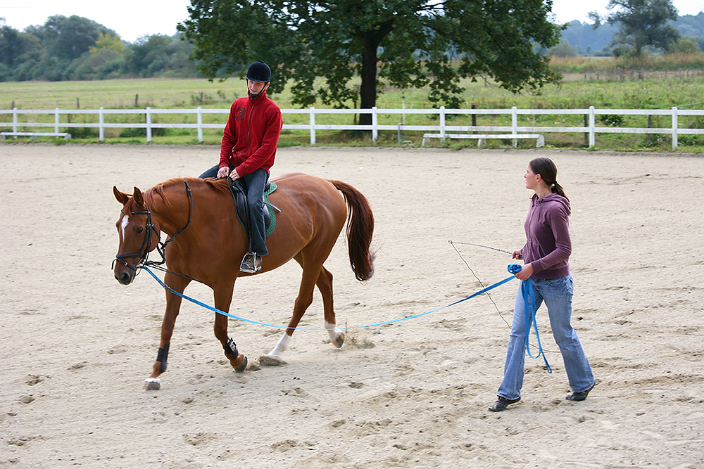 purchasing and selling horses in Scottsdale, Arizona
