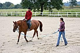 Entrenamiento del caballo