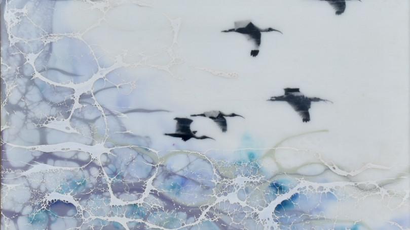 Flight of the Ibis