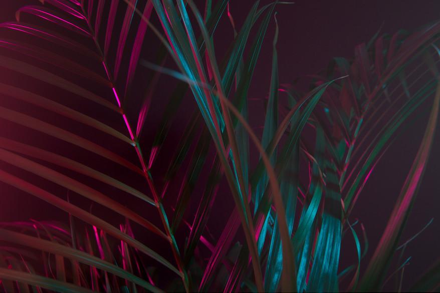 Nevermann palm skola 6.jpg
