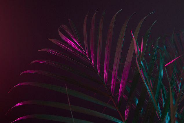 omslag palm skola 5.jpg