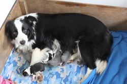 Fiona and her puppies