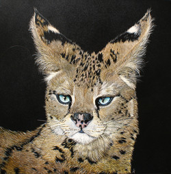 serval scratchboard 006 (3)