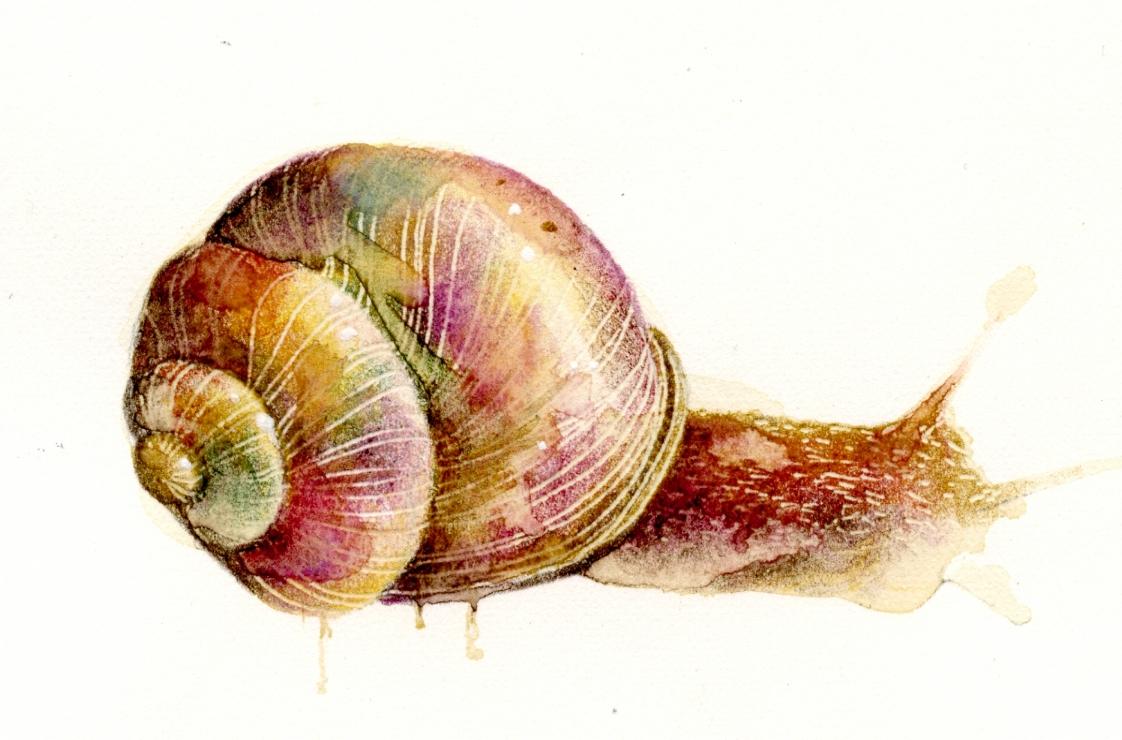 snail001
