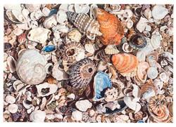 Geoff Kalbarri-Shells-EMAIL