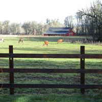 horses in the field.jpg