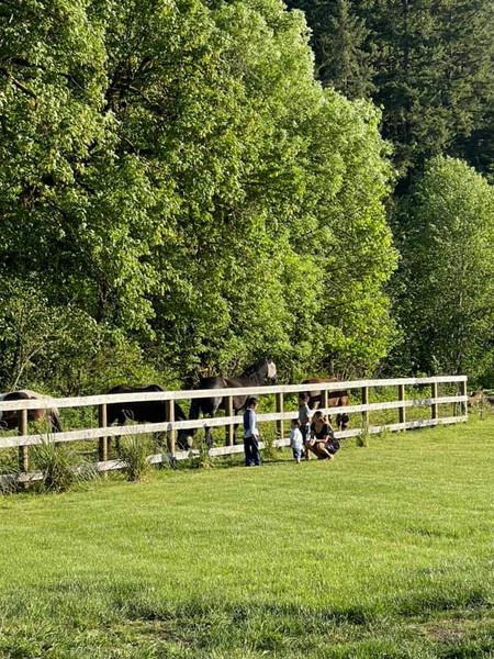 horses fence.jpg
