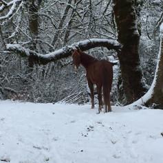 snow horse.JPG