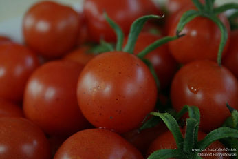 Fresh%2520Tomatoes%2520_edited_edited.jp