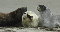 Meet the local sea lions