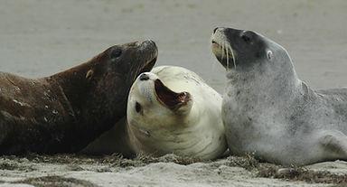 Sea lion 0003.jpg
