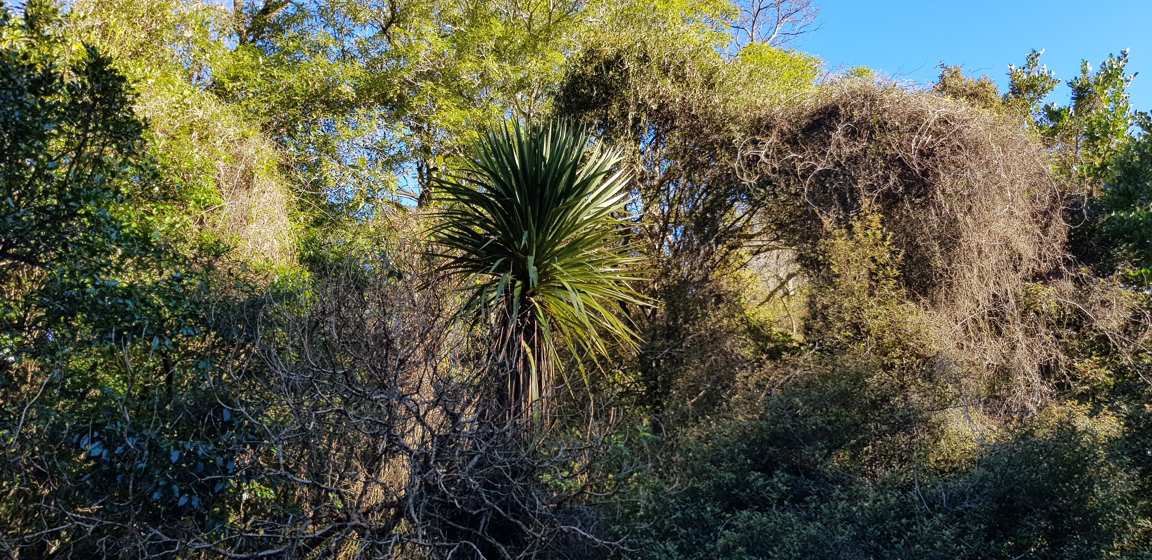 Hereweka native bush