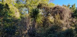 Hereweka native bush