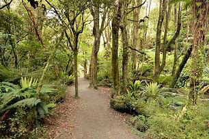 scenic route bush ODT.JPG