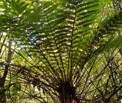 The Mighty Ponga Tree