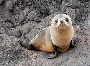 Fur Seal 2.jpg