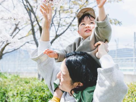 【3月28日(日)&29日(月)&30日(火)】 天神中央公園 桜撮影会決定!