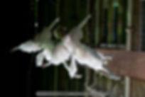 Dela Seward & Rowan Fae, Carnyville, Invisible Circus, Full Tilt Aerial, Vertical Dance