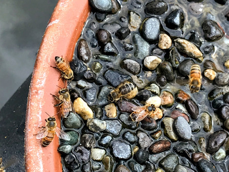 Easy DIY Honey Bee Watering Dish.  Yes, Really!