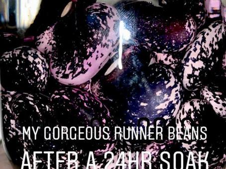 Runner Beans - The bean you absolutely must grow!