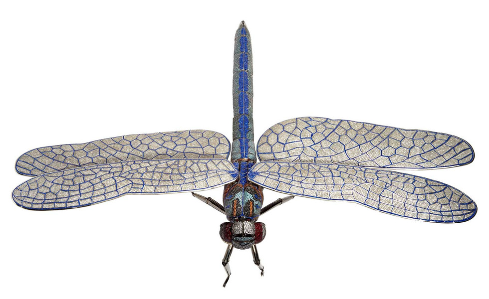 Matthew Campbell Laurenza: Dragonfly
