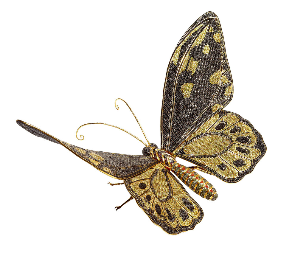 Matthew Campbell Laurenza: Butterfly