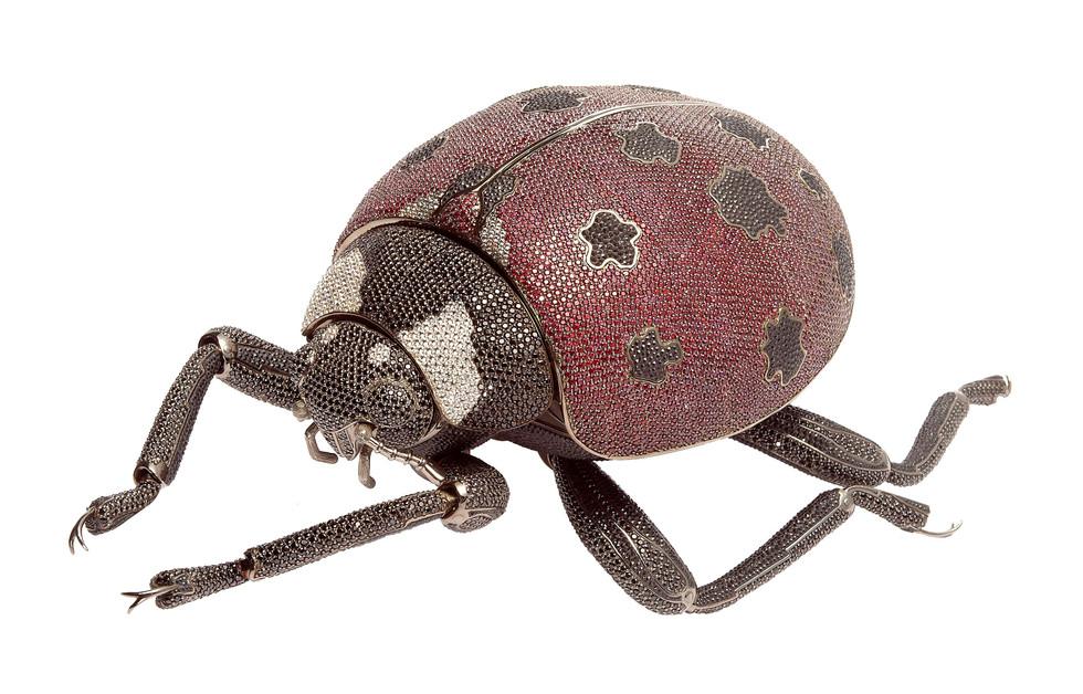 Matthew Campbell Laurenza: Ladybug