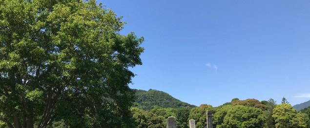 大宰府政庁跡 :夏草