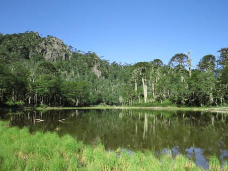 Sobre la protección de nuestros humedales: ¿se asegura con la reciente ley 21.202?