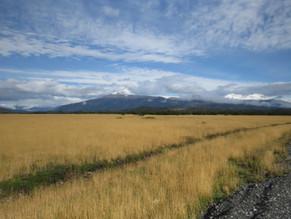 Declaración pública sobre suspensión de uso de especies exóticas en forestaciones de la Patagonia