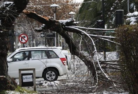¿Árboles o electricidad?: un falso dilema