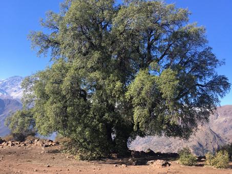 Declaración de la Mesa Multisectorial por el Bosque Esclerófilo