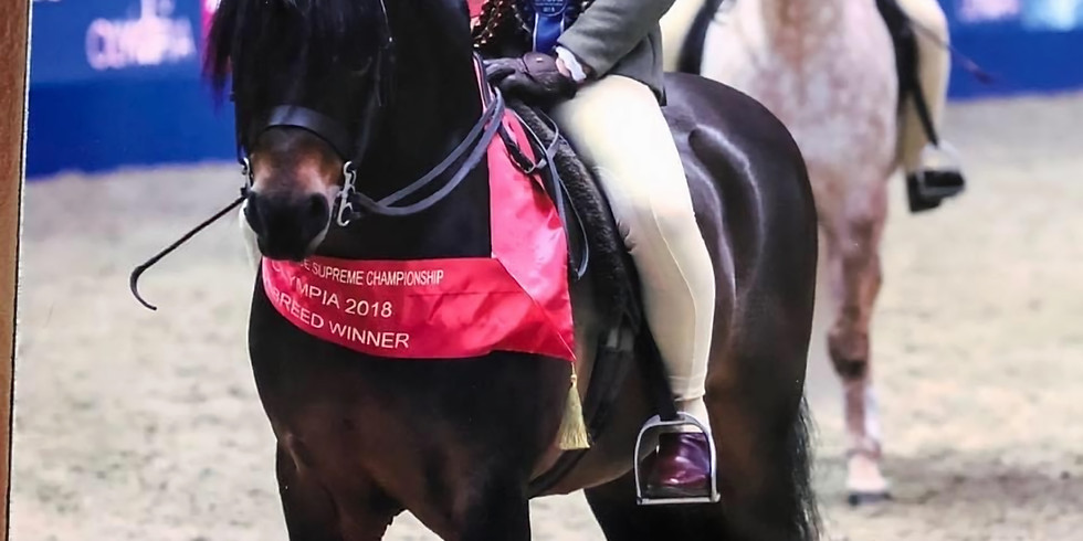 Showing & Ringcraft Clinic with Megan Hewitt