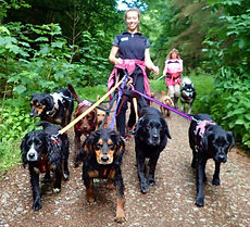 Lakeland Dog Walker, Local Dog Walker, Cockermuth, Keswick,Dearham, Doggy Day Care, Pet Feeding, Home visits, Cat sitter, Cat feeding, Pet feeder, Walking with my dog, hourly pck walks