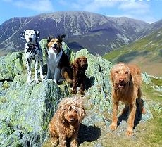Lakeland Dog Walker, Local Dog Walker, Cockermuth, Keswick,Dearham, Doggy Day Care, Pet Feeding, Home visits, Cat sitter, Cat feeding, Pet feeder, Walking with my dog