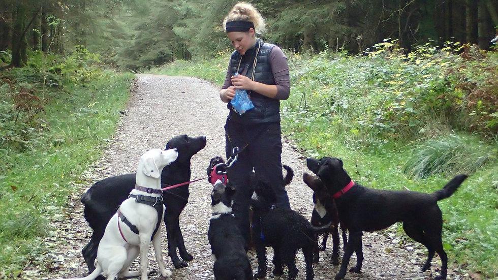 All eyes on the treats: Lakeland Dog Walker