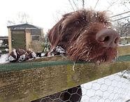 Lakeland Dog Walker, Local Dog Walker, Cockermuth, Keswick,Dearham, Doggy Day Care, Pet Feeding, Home visits, Cat sitter, Cat feeding, Pet feeder, Walking with my dog, puppy socialisation, puppy party