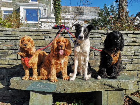 Lakeland Dog Walker, Professional Dog Walkers covering Cockermouth, Dearham, Brigham, Broughton Cross, Little Broughton, Great Broughton and Embleton, Cumbria.  We enjoy walking the fells, woodlands and round the lakes in the Cumbrian Lake District. We offer professional dog walking from 30mins to a full day as well as pet pop ins and socialisation sessions.