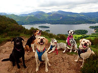 Lakeland Dog Walker, Local Dog Walker, Cockermuth, Keswick,Dearham, Doggy Day Care, Pet Feeding, Home visits, Cat sitter, Cat feeding, Pet feeder, Walking with my dog, puppy socialisation, puppy party, Walla Crag