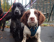 pupp party, puppy play date, puppy socialisation, puppy class, cockerouth, keswick, dog walker, doggy day care, lake district, puppy sitter, lakeland dog walker