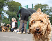 puppy party, puppy play date, puppy socialisation, puppy class, cockerouth, keswick, dog walker, doggy day care, lake district, puppy sitter, lakeland dog walker