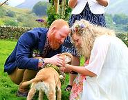 Lake District, Weddings, Keswick, Cockermouth, Wedding dogs, dogs at weddings, wedding dog sitter, wedding dog walker