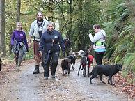 Chocolate labrador, dog walker,cockermouth, keswik, dearham, lake district, doggy day care, lakeland dog walker, walkies
