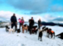 professional dog walker, sale fell, bryan turnbull, hannah turner, miechelle moynes, naomi le voi, isabelle le voi, keswick, cockermouth, lakeland dog walker, dog walker, snow