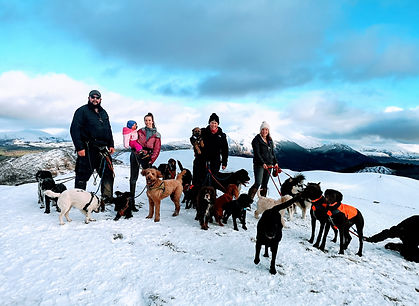 professional dog walker, sale fell, bryan turnbull, hannah turner, miechelle moynes, naomi le voi, isabelle le voi, keswick, cockermouth, lakeland dog walker, dog walker, snow